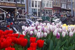 Tulips and Bicycles in Amsterdam stock image