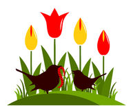 Tulips and birds Stock Image