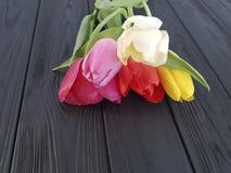 Tulips on black wooden, mourning, sadness, farewell. Tulips on black wooden mourning sadness farewell Stock Photos