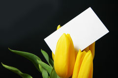 Tulips with blank card Stock Photo