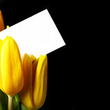 Tulips with blank card Stock Image