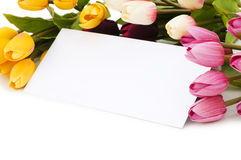 Tulips and blank message Royalty Free Stock Image
