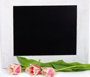 Tulips and blank message royalty free stock photos