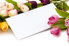 Tulips and blank message isolated Stock Photos