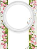 Tulips and blank white frame. EPS 10 Royalty Free Stock Image