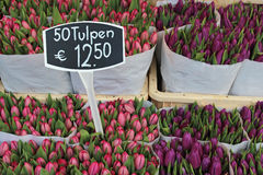 Tulips at the Bloemenmarkt (Flower Market) Amsterdam. Tulips at the Bloemenmarkt (flower market) on the Singel Canal in Amsterdam, The Netherlands.  This Stock Image