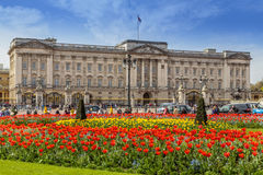 Tulips in bloom, London,England Stock Photography