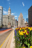 Tulips in bloom on Michigan Avenue in Chicago. CHICAGO - MAY 6: Tulips in bloom on Chicago's Michigan avenue on 6 May, 2016 Royalty Free Stock Image