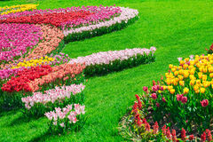 Tulips blooming flowers field, green grass lawn in beautiful spr Stock Photo