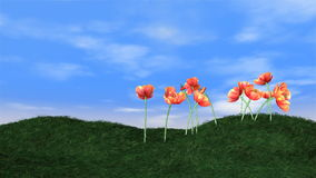 Tulips blooming on green meadow and animated clouds on the background,time-lapse, stock footage. Video vector illustration