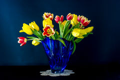 Tulips in Blue Stock Photography