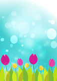 Tulips on a  blue bokeh. Royalty Free Stock Image