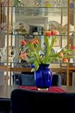 Tulips in blue vase Royalty Free Stock Images