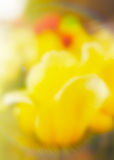 Tulips blurred Royalty Free Stock Image