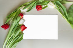 Tulips on the Board. Red and white tulips on the Board royalty free stock image