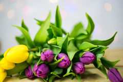 Tulips with bokeh. For easter Royalty Free Stock Photo