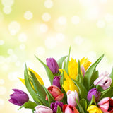 Tulips with bokeh light in background Royalty Free Stock Photography