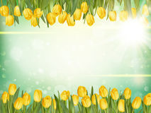 Tulips bonitos Eps 10 Imagens de Stock