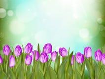 Tulips bonitos Eps 10 Fotografia de Stock