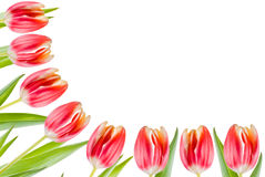 Tulips border Royalty Free Stock Photos