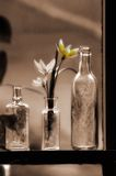 Tulips in bottle Royalty Free Stock Photography