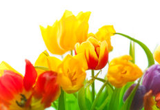 tulips in bouqet Stock Photo