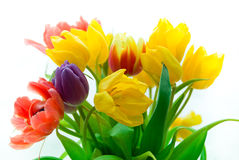 Tulips in bouqet Royalty Free Stock Photos
