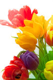 Tulips in bouqet. Colored tender tulips in spring bouqet royalty free stock images