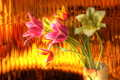 Tulips bouqet - hdr image. Different tulips bouqet on the golden background - hdr image royalty free stock photo