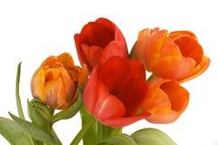 Tulips bouquet Stock Image