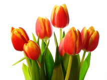 Tulips bouquet. Red gold and yellow bouquet of tulips Stock Photo