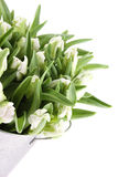 Tulips Bouquet. Close-up of a beautiful bouquet of white tulips in a aluminum pail. Isolated on white background stock photo