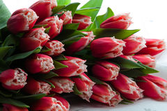 Free Tulips Bouquet Royalty Free Stock Photography - 78843907