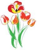 Tulips bouquet. Stock Photos