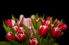 Tulips. Bouquet of tulips with black background Royalty Free Stock Photos