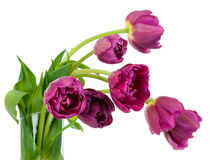 Tulips bouquet closeup details in glass vase Stock Photos