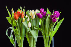 Tulips bouquet. For easter and spring on black background Royalty Free Stock Images