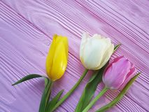 Tulips bouquet fresh holiday on a pink wooden delicate background march romantic. Beautiful bouquet fresh tulips on a pink wooden background march romantic Stock Photography