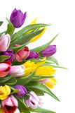Tulips Bouquet Isolated On White Stock Image