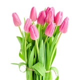 Tulips bouquet isolated Royalty Free Stock Images