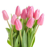Tulips bouquet isolated Stock Image