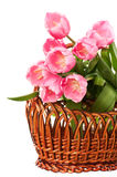 Tulips bouquet isolated Stock Photo