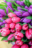 Tulips. Bouquet of tulips on the market in spring Stock Photos