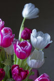 Tulips. A bouquet of tulips on Mother`s Day royalty free stock photography