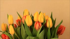 Tulips bouquet orange yellow stock video
