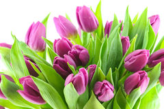 Tulips bouquet Stock Photo