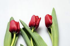 Tulips bouquet : red flowers Royalty Free Stock Photos