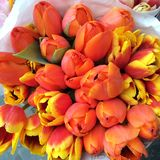 Tulips. Bouquet of Tulips in spring Royalty Free Stock Images