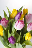 Tulips. Bouquet of tulips on a white background Royalty Free Stock Photography