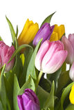 Tulips. Bouquet of tulips on a white background Royalty Free Stock Images